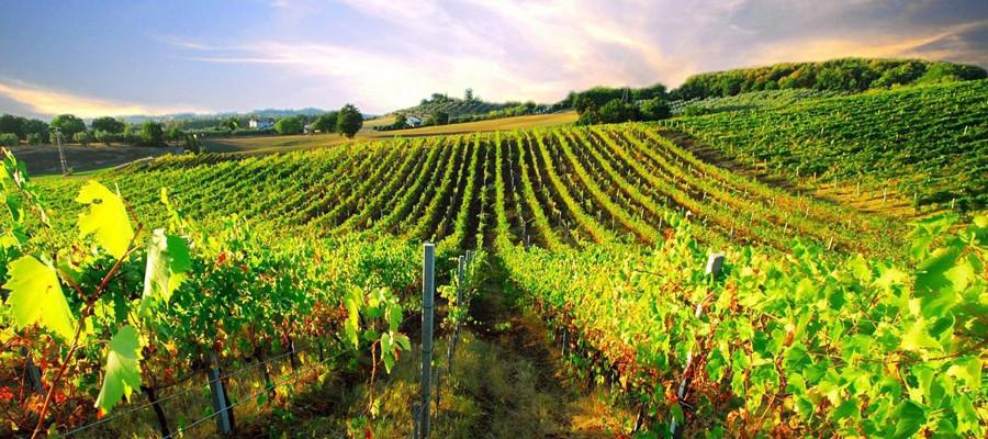 Paphos Wine Route